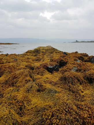 ile-de-mull-the-bergamote-blog5